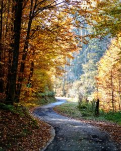 autumn-1021327_1920